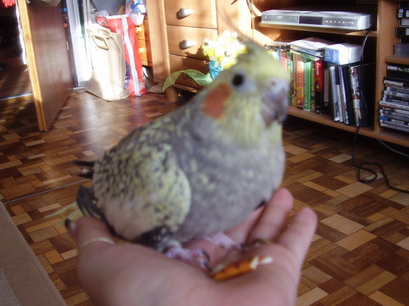 http://www.parrotclub.sk/forumfull/usergallery/janka.1999/P3280822upr.jpg.jpg